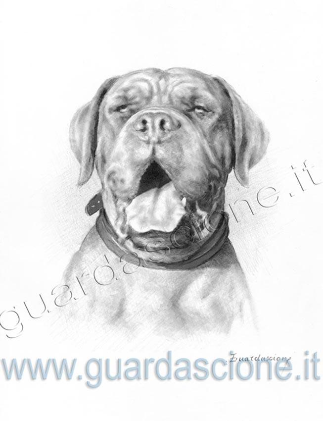 spesso DISEGNI di CANI eseguiti da FOTO :: Ritratti di cani disegnati a  KA84