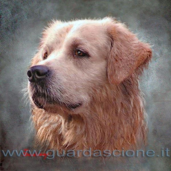 Ritratti E Dipinti Di Animali Quadri Di Arte Cani E Gatti