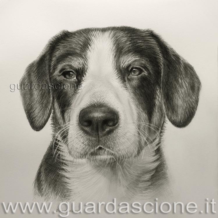 Eccezionale Ritratti e Dipinti di cani, QUADRO di cane disegnato a matita FD69