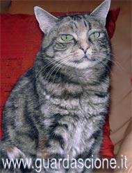Ritratti di cani e gatti dipinti a olio su tela - Olio di ruta repellente gatti ...